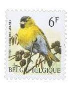 Vogels - Buzin/België
